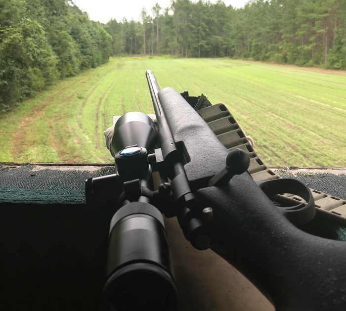 rifle and foodplot